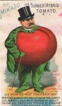 The Mikado or Turner Hybrid Tomato Man – Rice Seeds Advertising Card